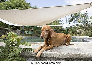 dog laying beside swimming pool in El Salvador