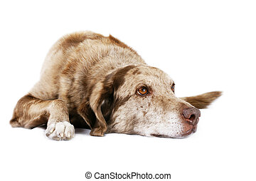 Dog laying down - Funny looking dog laying down and looking ...