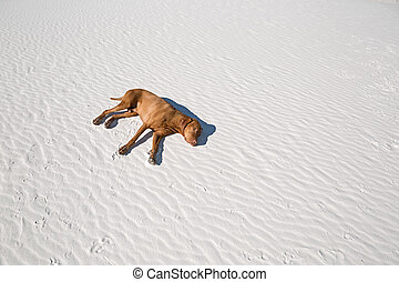 dog laying exhausted in desert sand