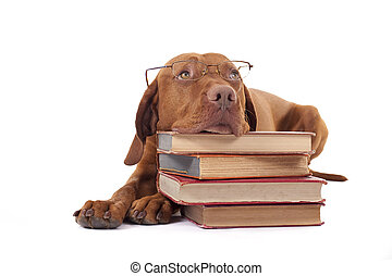 dog laying head on a pile of books - eyewear wearing golden...