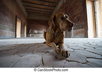 dog laying on medieval room floor in mexico