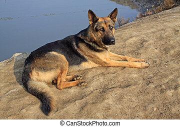 dog layon the ground
