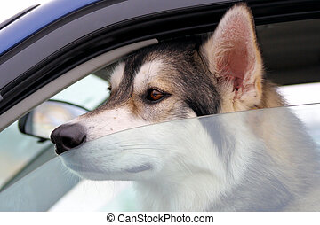 Dog Left Behind In Vehicle - Dog left alone in vehicle -...