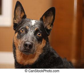 Dog looking alert