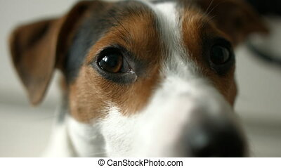 Dog looking at the camera, shooting from hands