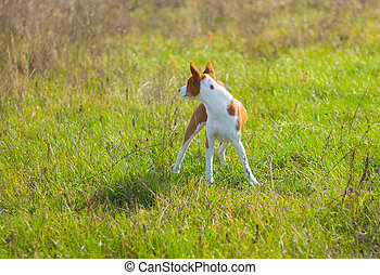 Dog looking back while playing in wild grass at fall season
