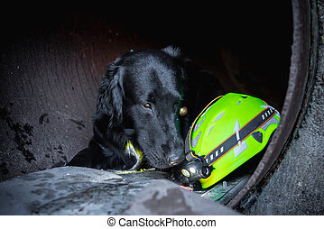 Dog looking for injured people in ruins