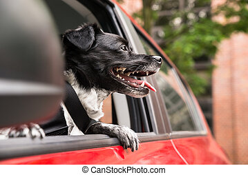 Dog Looking Out Of A Car Window