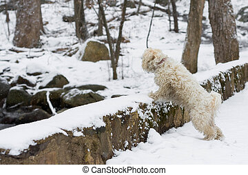 Dog looking over bridge