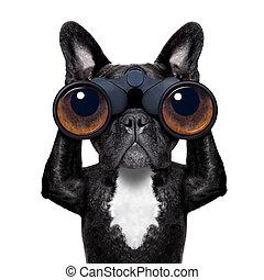 dog looking through binoculars