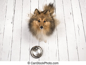 Dog looking up with an empty feeding bowl in front of her