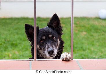 Dog looks through a window - Black dog looks pleadingly...