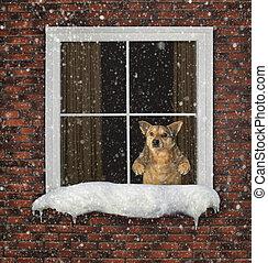 Dog looks through the window
