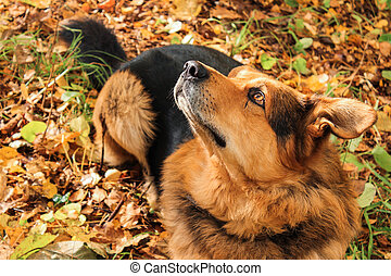 Dog looks up in the forest