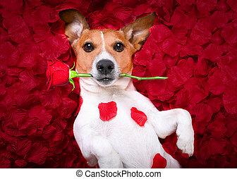 dog love rose valentines