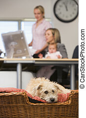 Dog lying in home office with two women and a baby in background