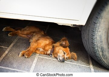 Dog Lying in the shadow of the car