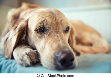 Dog lying on the bed