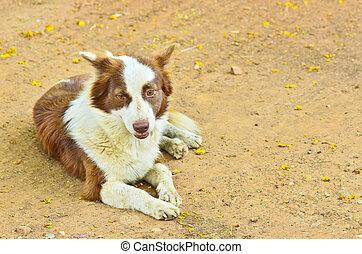 Dog lying on the ground