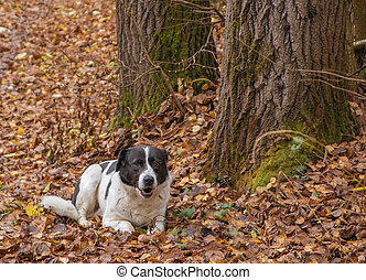 Dog lying on the lawn in autumn