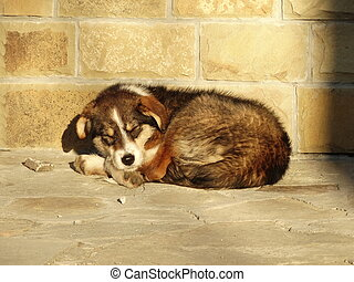 Dog Lying on the Street in front of a Brick Wall
