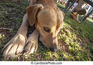 dog lying with sad face