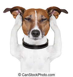dog meditates with closed eyes and ears