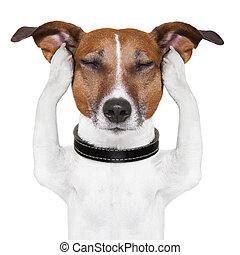 dog meditation - dog meditates with closed eyes and ears