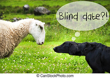 Dog Meets Sheep, Text Blind Date