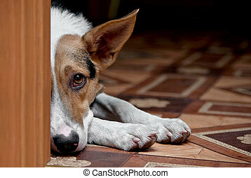 dog melancholy - animals, pets, dog, domestic, mammal, one,...