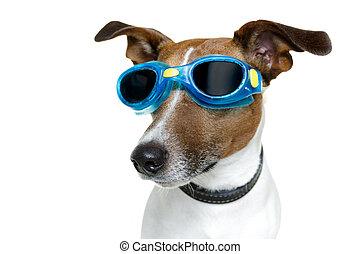 dog, met, blauwe , goggles