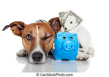 dog, met, piggy bank