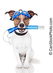 dog, met, snorkel