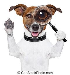 dog, met, vergrootglas
