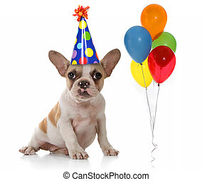 dog, met, verjaardagsfeest, hoedje, en, ballons