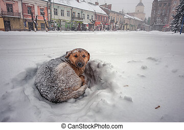 mongrel in snow on winter city