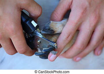 Dog Nail Clippers - Close up view of someone clipping a dogs...