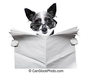 dog newspaper - dog reading and holding a blank newspaper