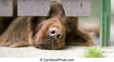 Dog nose banner