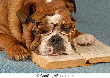 dog obedience school - english bulldog reading novel - dog...