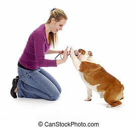 "woman teaching english bulldog to ""high five"" or shake a paw on white background"