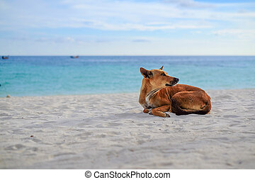 dog Ocean Beach