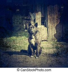 Dog on a chain at the door. - A dog on a chain at the door....