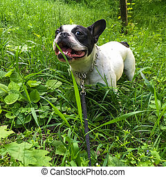 dog on a grass in the park