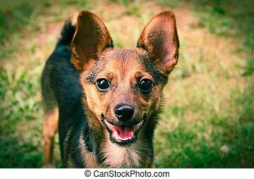 Dog on a green grass outdoors