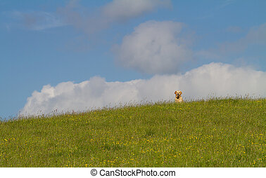 Dog on a hill