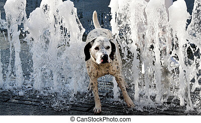 Dog on a hot summer day. Refreshed at the fountain