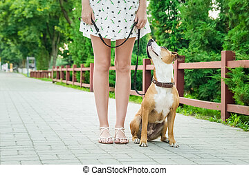 Dog on a leash looking and listening to her owner