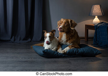 dog on a leather couch in a loft interior. pet is at home on the blue wall background.