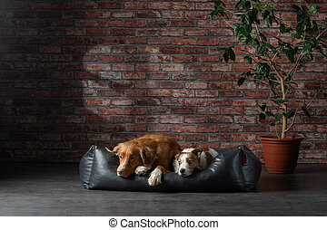 dog on a leather couch in a loft interior. pet is at home on the brick wall background.